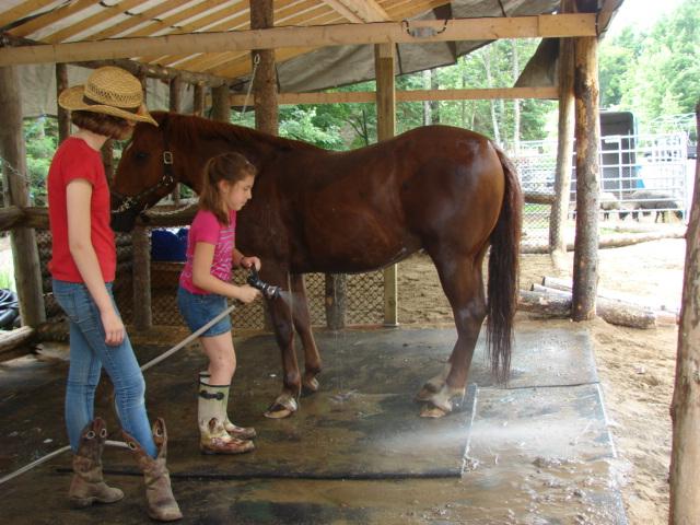 douche-des-chevaux